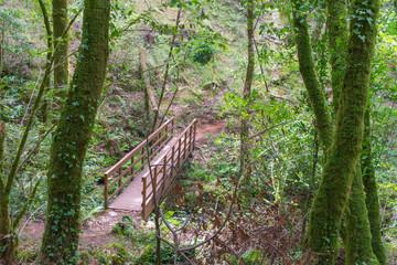 wooden bridge over the Eume river in the Fragas do Eume