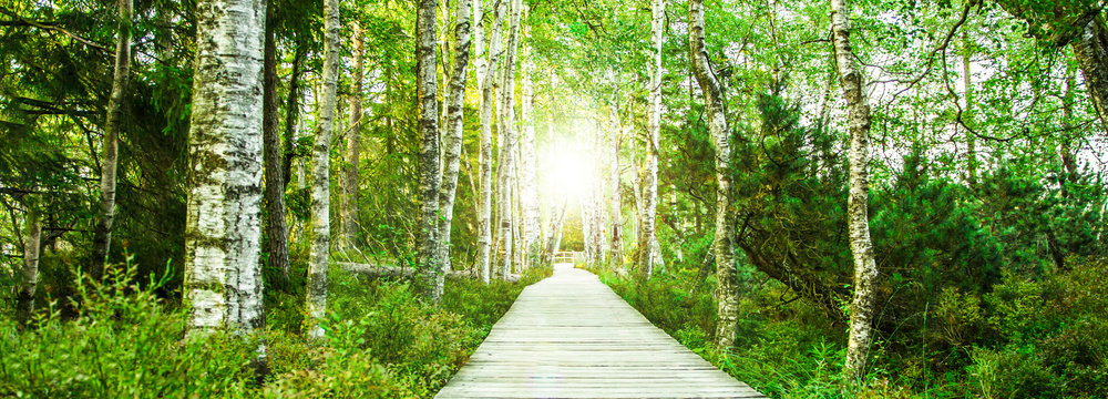 Wooden footbridge in the green birch forest in the Black Forest in the evening with setting sun