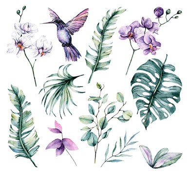 Set with watercolor hummingbird, tropical leaf and flowers orchid. Isolated on white background. Hand painting illustration.
