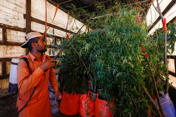 A man sprays water on plants that are to be transported for planting along the pilgrimage route between Iraqi Shi'ite Muslim holy city of Najaf and Karbala, at a farm on the outskirts of Karachi