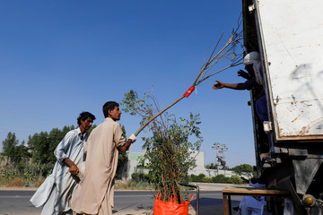 Labourers load a truck with trees and plants to be transported for planting along the pilgrimage route between Iraqi Shi'ite Muslim holy city of Najaf and Karbala, at a farm on the outskirts of Karachi