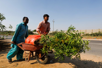 Labourers move a wheelbarrow with bags of plants to be transported for planting along the pilgrimage route between Iraqi Shi'ite Muslim holy city of Najaf and Karbala, at a farm on the outskirts of Karachi