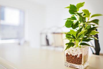 キッチンカウンターに飾られた観葉植物