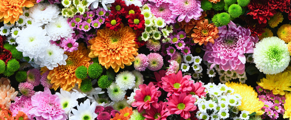 Foto op Plexiglas Bloemenwinkel Flowers wall background with amazing red,orange,pink,purple,green and white chrysanthemum flowers ,Wedding decoration, hand made Beautiful flower wall background