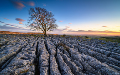 Limestone Pavement with Lone Ash Tree, above Malham Village in the Yorkshire Dales where there is an area of Limestone Pavement known as Malham Lings
