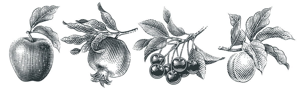 Cherries, apple, pomegranate and apricot set. Hand drawn engraving style illustrations.