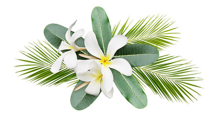 Photo sur Plexiglas Frangipanni Frangipani (plumeria) flowers and leaves of pulm in a tropical arrangement