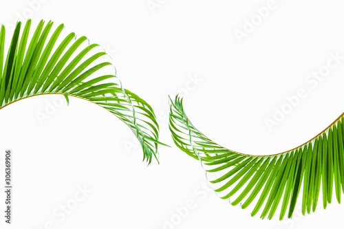 Wall mural tropical and coconut leaf isolated on white background, summer background
