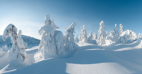 Photo sur cadre textile Bleu jean Panorama of fantastic winter landscape with snowy trees. Carpathian mountains, Ukraine, Europe. Christmas holiday concept