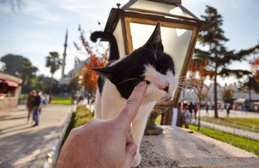 view of hand touching cat - playing with cat in istanbul - turkey.