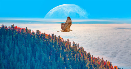 Aerial view of autumn forest over the clouds with red tailed hawk - Yedigoller , Turkey