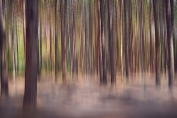 Pine Forest abstract background
