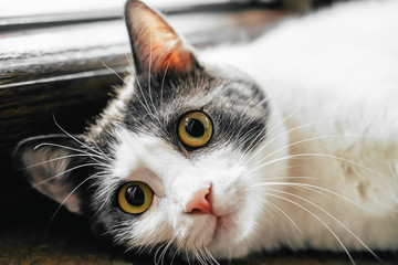 Cute Cat Portrait At Home