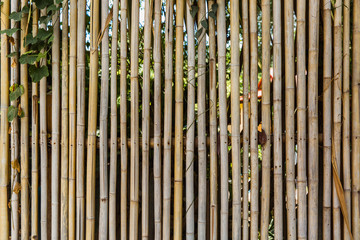 bamboo fence with greens for background in tropical country