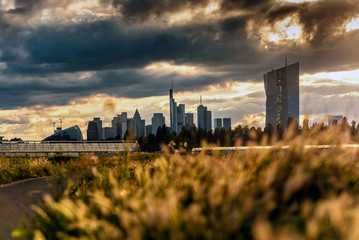 Gewächshäuser in Frankfurt Oberrad mit Skyline