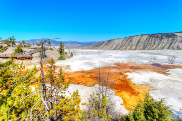 Canary Spring at Mammoth Hot Springs in Yellowstone National Park
