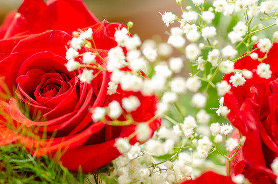 romantic red roses and baby's breath
