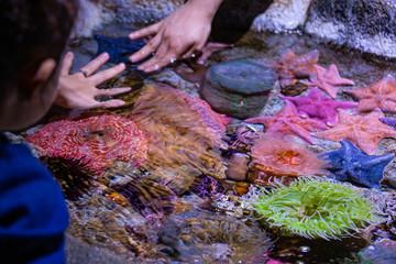 Petting Starfish and Anemones