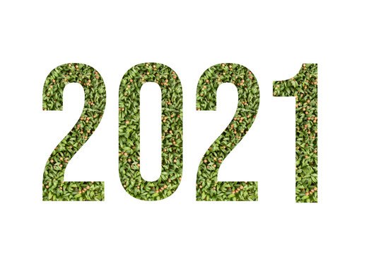 Microgreen font number 2021 made of cilantro microgreen on white background with paper cut shape of number. Collection of flora font for your unique decoration in summer