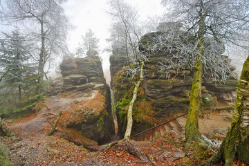 Sandsteinfelsen im Elbsandsteingebirge mit Raureif im Nebel -  Sandstone rocks in the Elbe Sandstone Mountains with hoarfrost