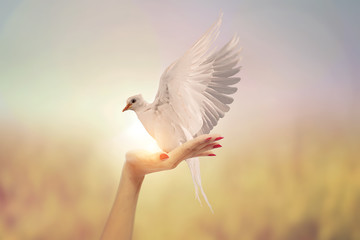 Wall Mural - White Dove in Two Hand woman on vintage pastel background in international day of peace concept