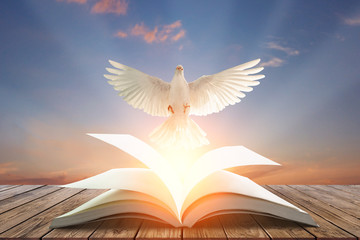 Wall Mural - White pigeons fly out of books that are flicked by the wind in beautiful light on sunset background.freedom concept and international day of peace