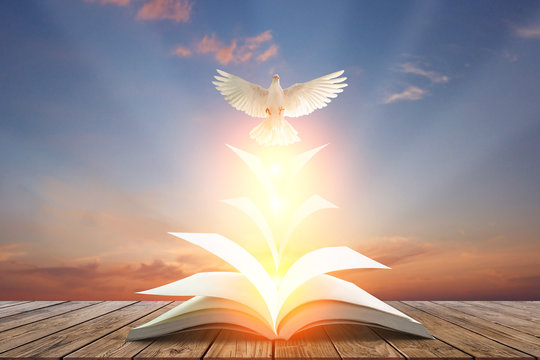 White pigeons fly out of books that are flicked by the wind in beautiful light on sunset background.freedom concept and international day of peace