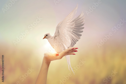 Canvas Prints White Dove in Two Hand woman on vintage pastel background in international day of peace concept