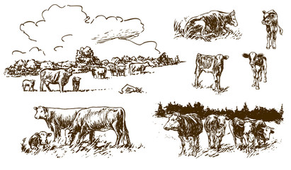 cows and calves on pasture - hand-drawn illustrations (vector)