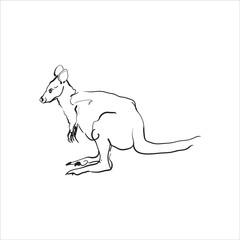 Hand drawing of a kangaroo