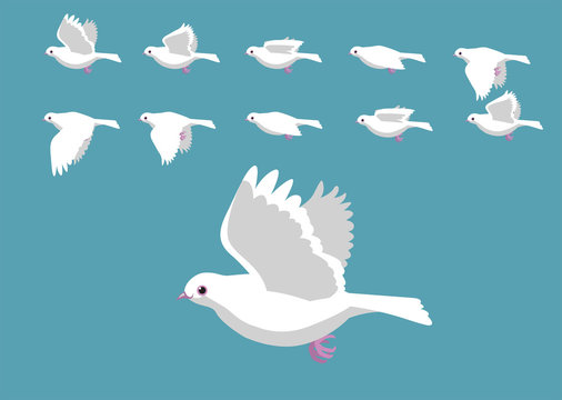 White Dove Flying Motion Animation Sequence Cartoon Vector Illustration
