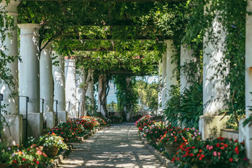 Poster de jardin Europe Méditérranéenne Beautiful floral passage with columns and plants overhead in garden in Anacapri, capri island, Italy