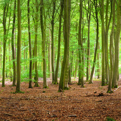 Keuken foto achterwand Bos in mist Spring forest in the Netherlands