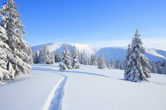 Majestic landscape in the cold winter morning. The wide trail. Christmas forest. Wallpaper background. Location place the Carpathian mountains, Ukraine, Europe.