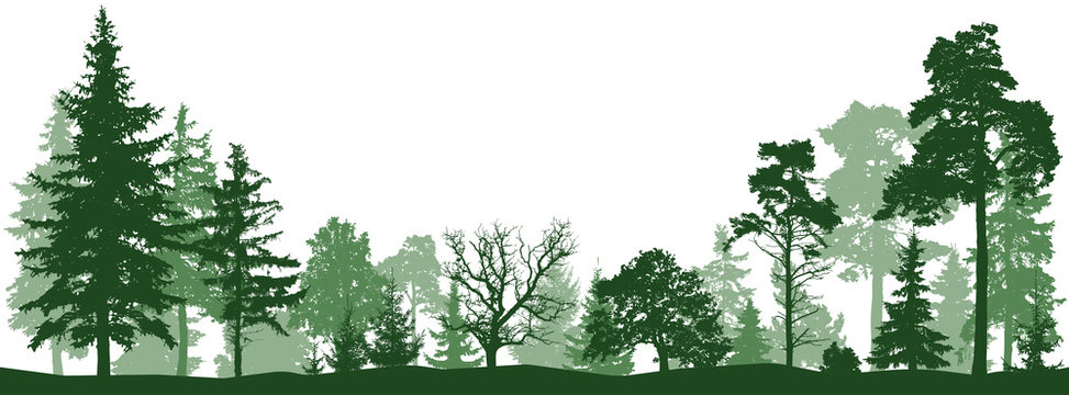 Tree forest vector silhouette. Isolated set