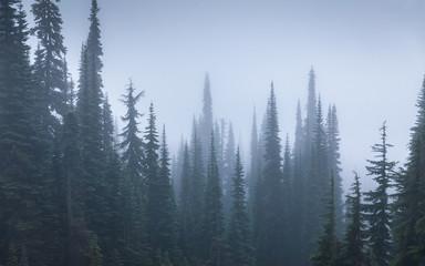 Pine woods covered by fog inside Mount Rainier National Park.