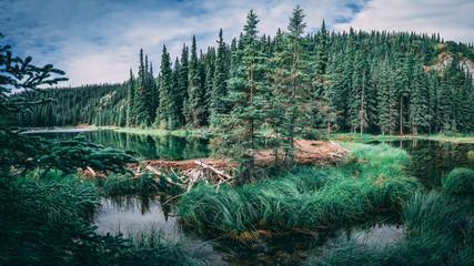 Beaver dam in Horseshoe lake in Denali national park, Alaska Wall mural