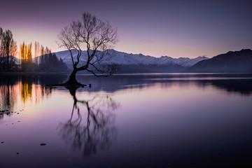 The famous lake Wanaka tree at twilight, South Island, New Zealand