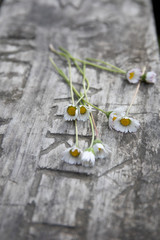 Wild daisies  on a rustic picnic table out doors