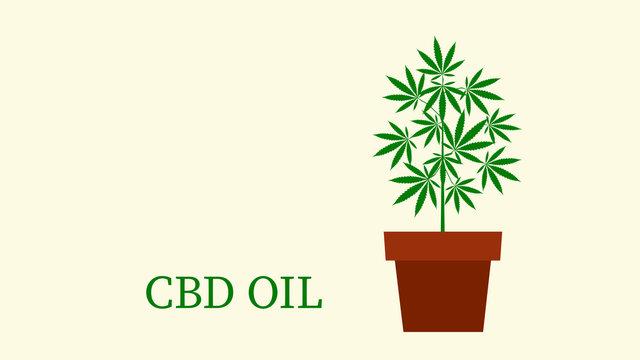 cannabis marijuana plant in flowerpot  illustration