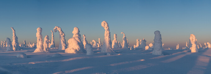 Panorama view of the snow packed trees on Riisitunturi fell at winter in Riisitunturi National Park, Posio, Finland