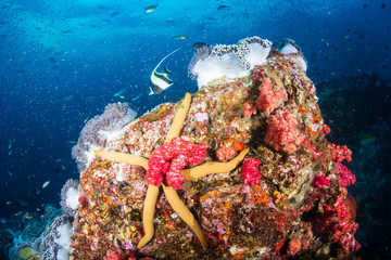 Large Starfish on a colorful tropical coral reef