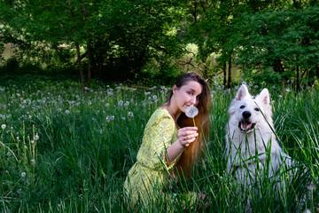 Yong woman with swiss shepherd in the field of dandelions