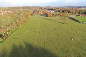 Schafe auf einer Weide bei Sonnenschein im Herbst