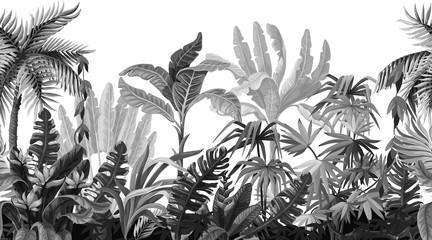 Naklejka premium Granica z drzewami dżungli w stylu monochromatycznym