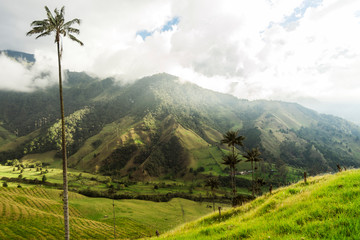 Panoramic Views of The Cocora Valley in Salento, Quindío, Colombia.