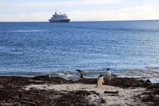 Pinguine am Strand mit Blick auf Schiff - Falklandinseln