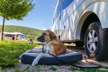 Hund vor dem Wohnmobil  Fotobehang