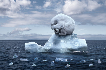polar bear sits on a melting glacier