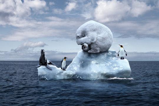 polar bear sits on a melting glacier